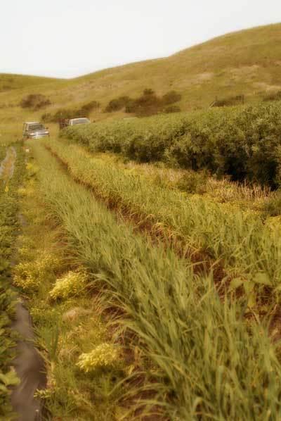 Kurtsfarm
