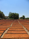 Apricotflats